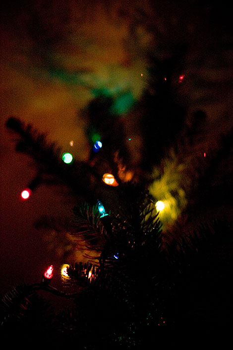Christmas lights on our noble fir
